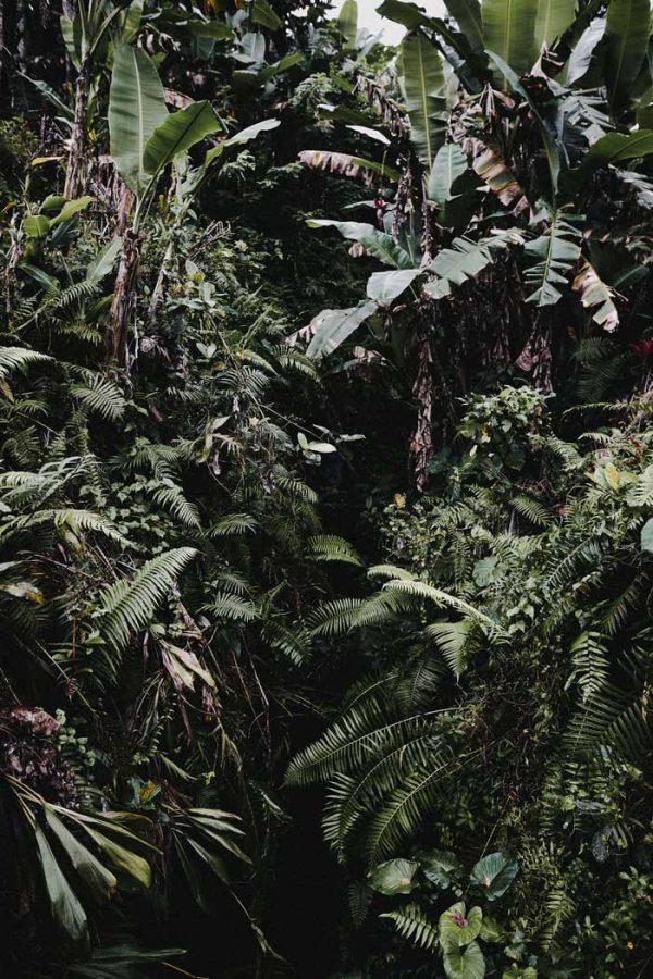 Jungle - Bali
